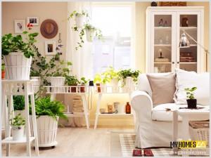 Kerala home interior palnts