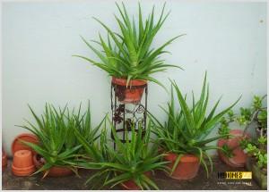 interior plants in kerala