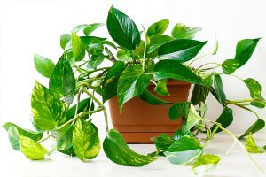 indoor plants kerala thrissur