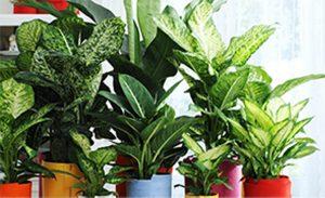 kerala indoor plant kochi