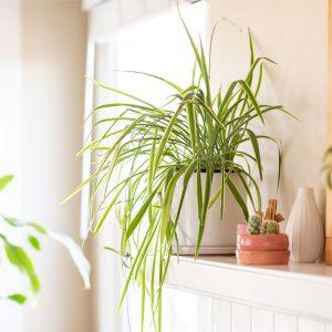 indoor plants eranakulam kerala