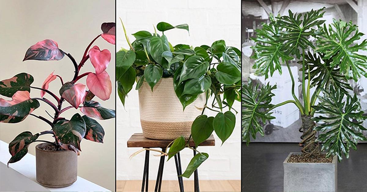 kerala indoor plants